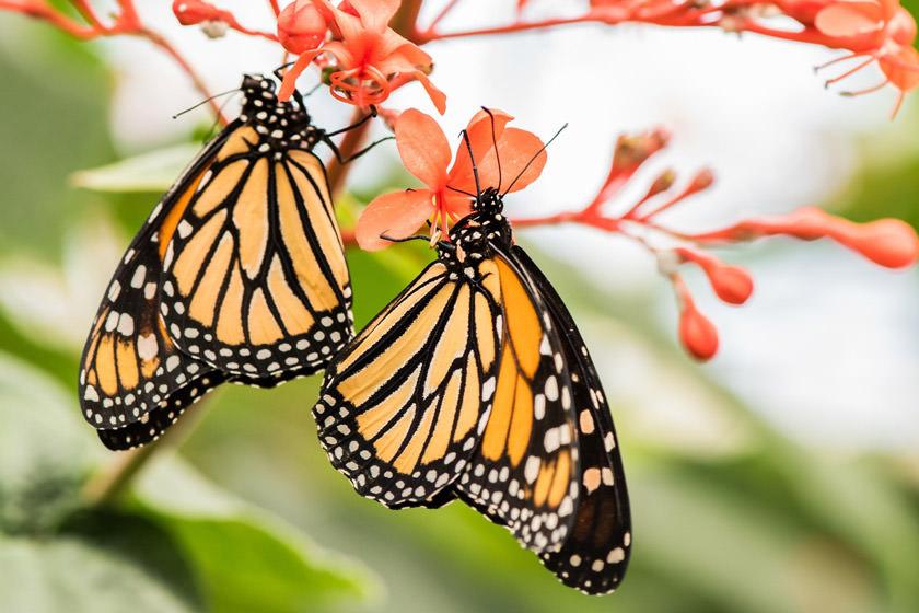 پارک-پروانه-ها-و-قلمرو-حشرات
