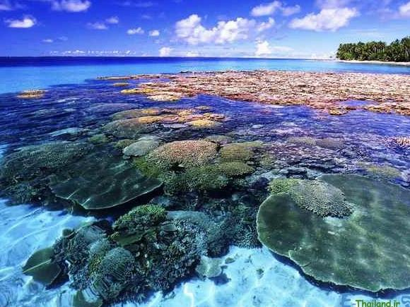 جزیره-مرجان-ها