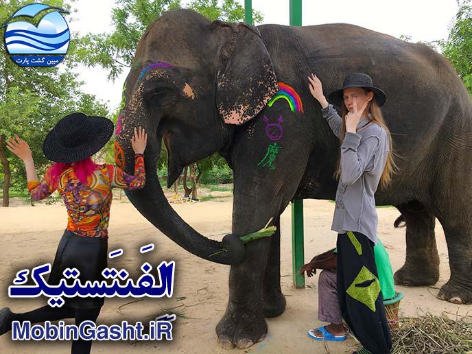 اِلِفَنتَستیک-مزرعه-فیل-ها