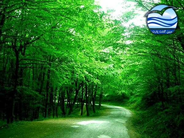 جنگل-بلگراد-در-استانبول