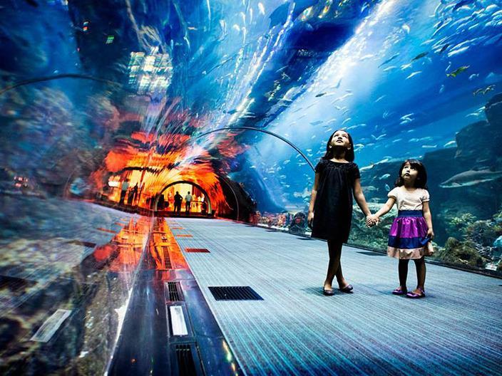آکواریوم-و-حیات-وحش-زیر-آب