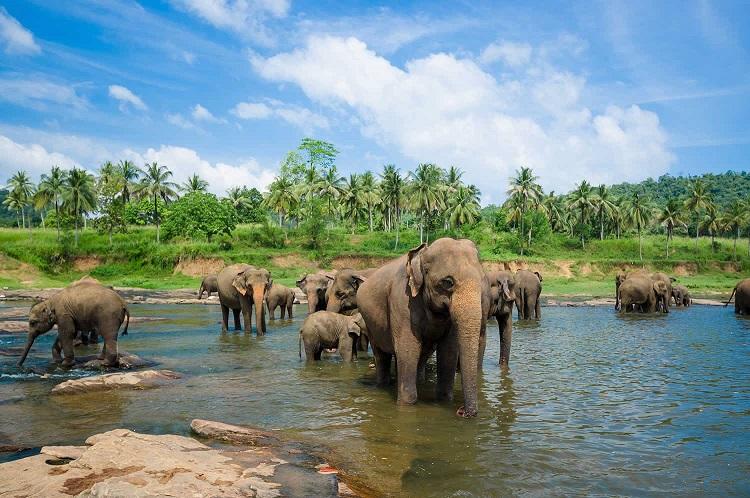 درباره-سریلانکا